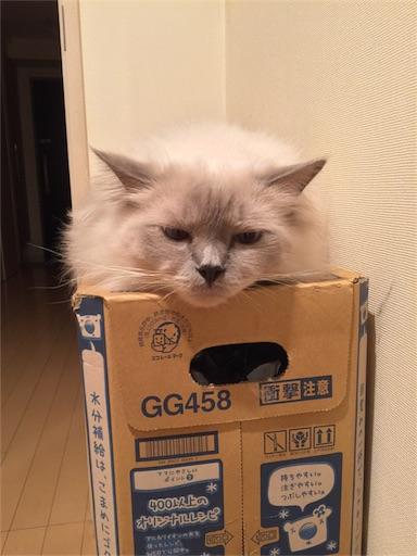 f:id:templecat:20161101154321j:image