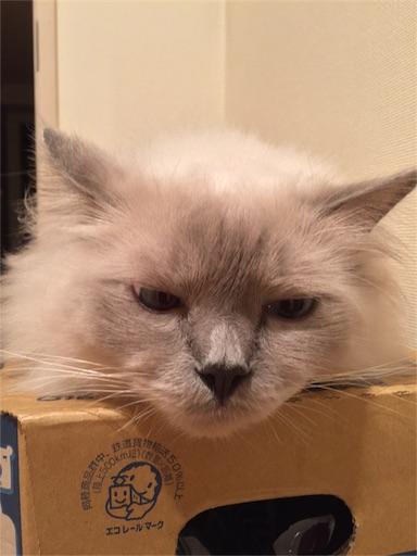 f:id:templecat:20161101154349j:image