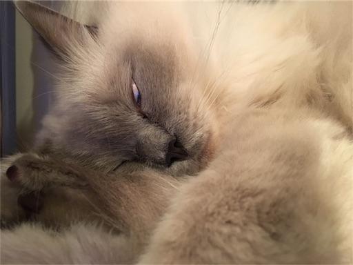 f:id:templecat:20161124005145j:image