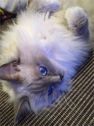 f:id:templecat:20161125124424j:image