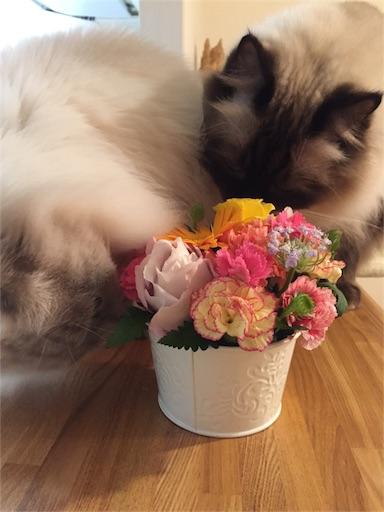 f:id:templecat:20161205153348j:image