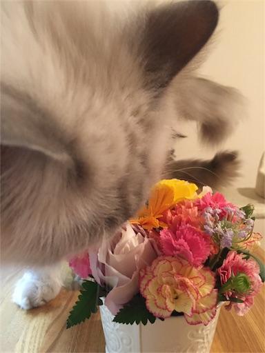 f:id:templecat:20161205153528j:image