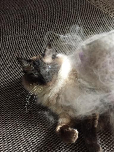 f:id:templecat:20170510214043j:image