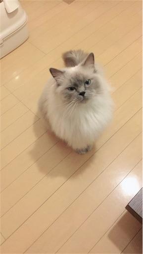 f:id:templecat:20180416222044j:image