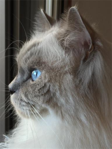 f:id:templecat:20200207221944j:image