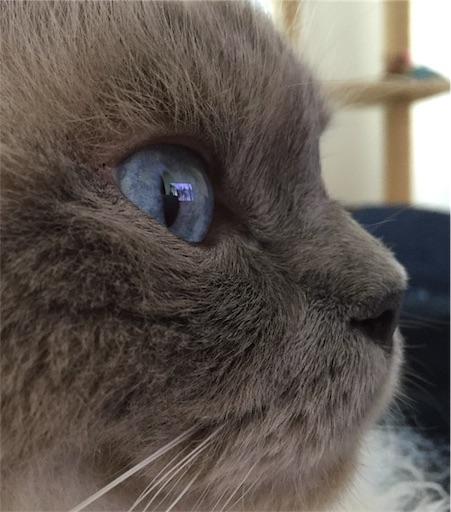 f:id:templecat:20200617215249j:image
