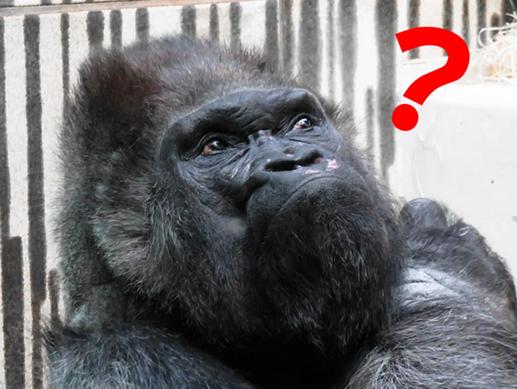 f:id:tender-gorilla:20180701094221p:plain