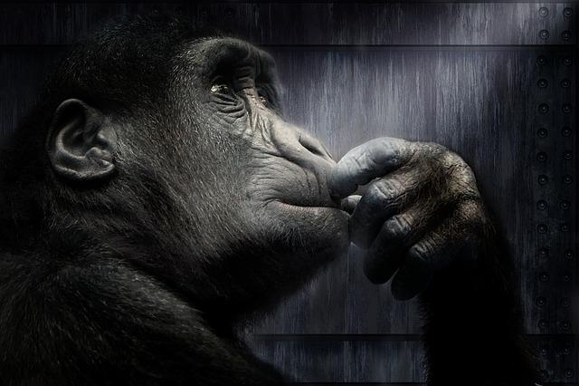 f:id:tender-gorilla:20180701094304j:plain