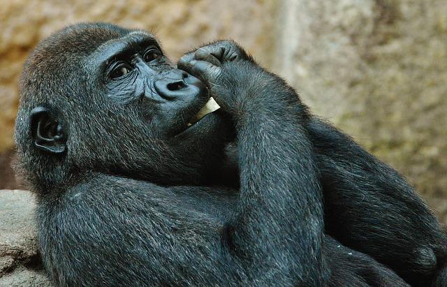 f:id:tender-gorilla:20180701094950j:plain
