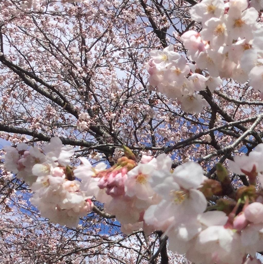 f:id:tender-higashikoyodai:20190419183712j:image