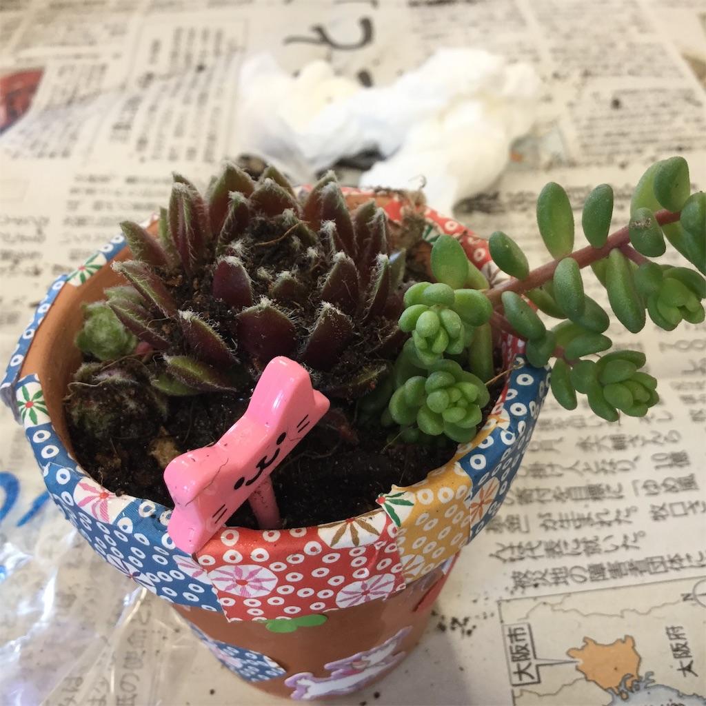 f:id:tender-higashikoyodai:20190528115503j:image