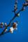 [花][梅][白梅][Nikkor][AF70-180mmF4.5-5.6DMicro][macro]