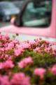 [花][Nikkor][AFS24-70mmF2.8GED]ピンクつつじとピンク車
