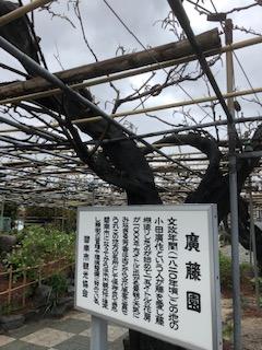 f:id:tengudo_staff:20190411104223j:plain