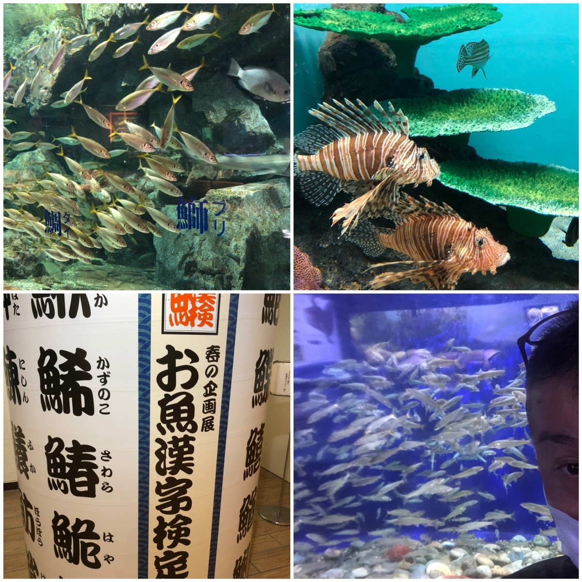 f:id:tengudo_staff:20200626192349j:plain