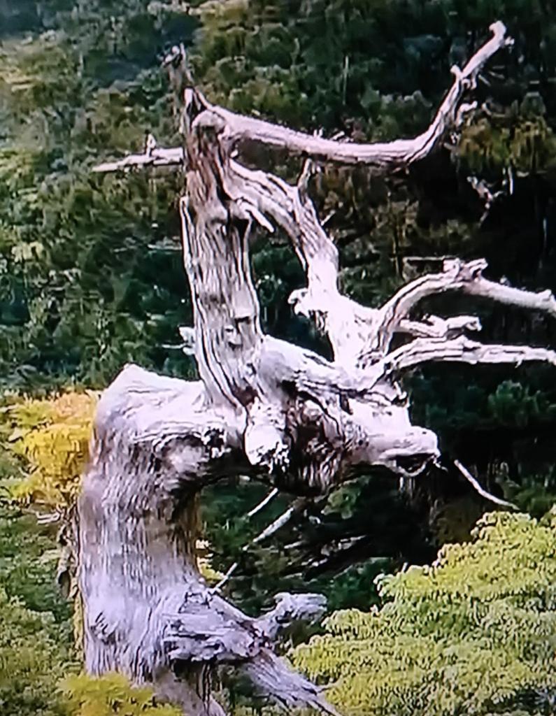f:id:tenkai_kaiou:20170819222049j:plain