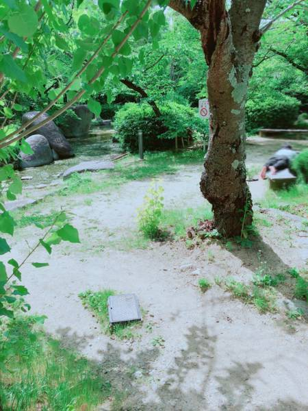 大阪大学の庭