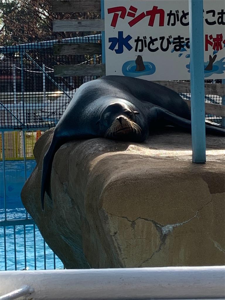 f:id:tenshinocake:20191031092753j:image