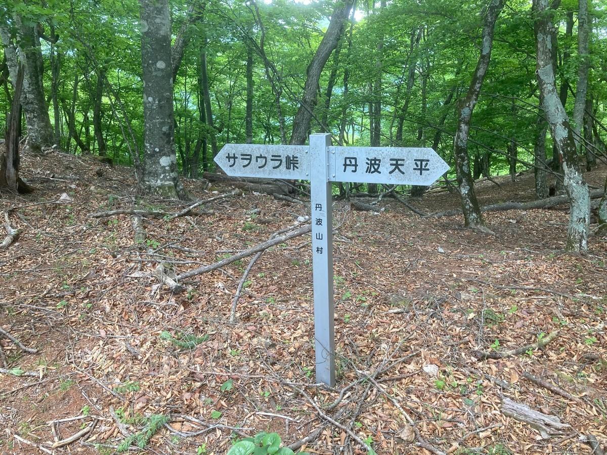 f:id:tenshinokuma:20210529130118j:plain