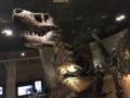 化石ティラノ