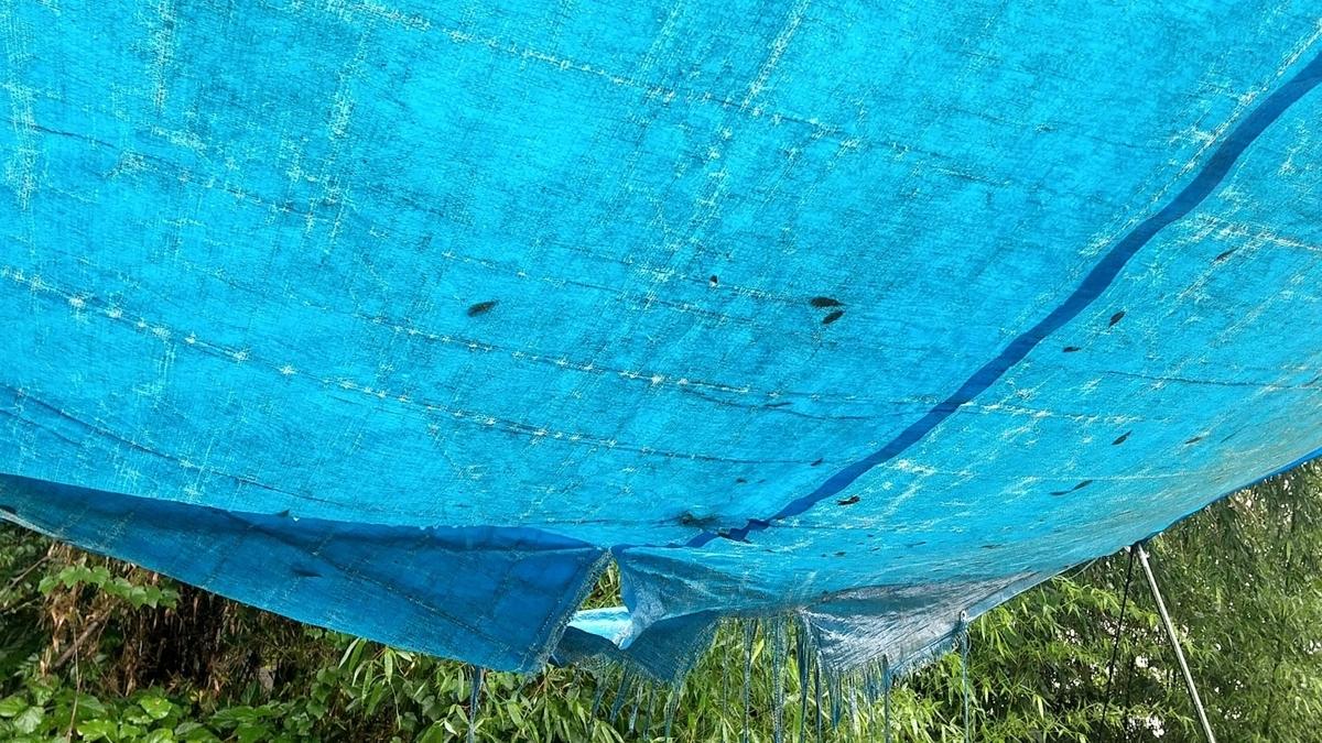 f:id:tenten-oyaG:20210913051458j:plain