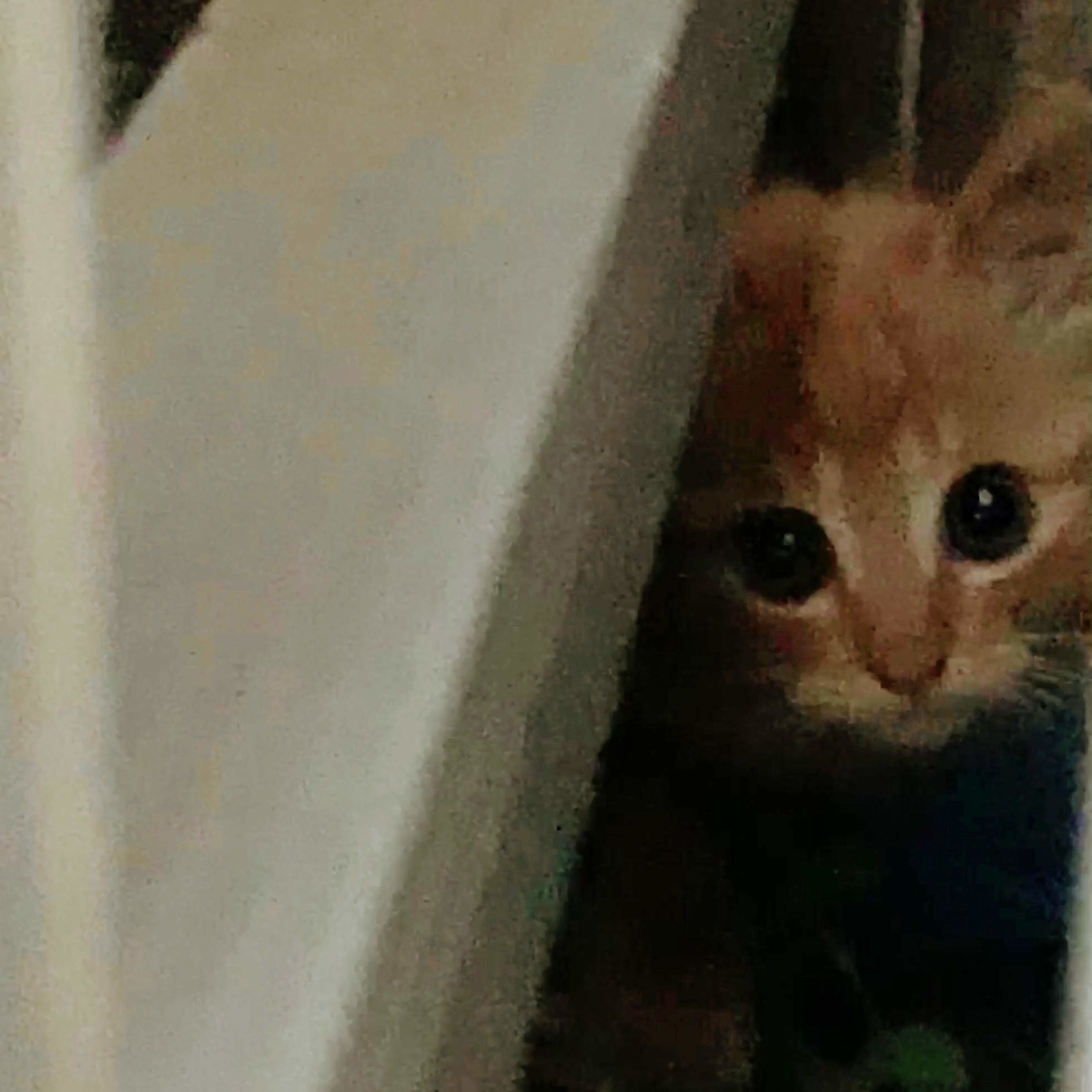 雨戸の陰からのぞく猫