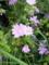 北海道の草花with雨露