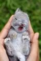 Googleで見付けたウサギちゃん