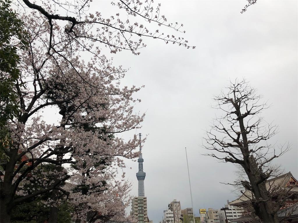 f:id:terakobuta:20190402133357j:image