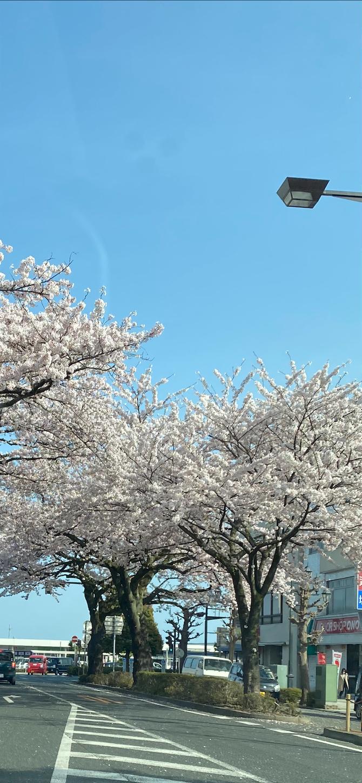f:id:terakoyakun:20210402201545p:image