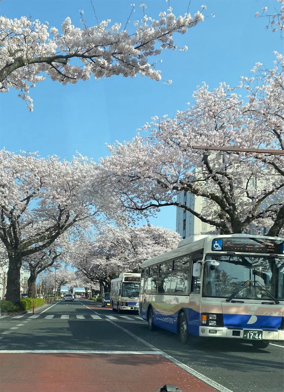 f:id:terakoyakun:20210402203405j:image