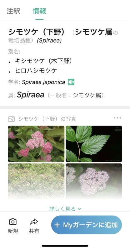 f:id:teresatotomoni:20210525094844j:plain