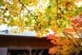 [圓光寺][京都市左京区]京都市左京区|圓光寺