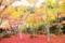 京都市左京区|圓光寺
