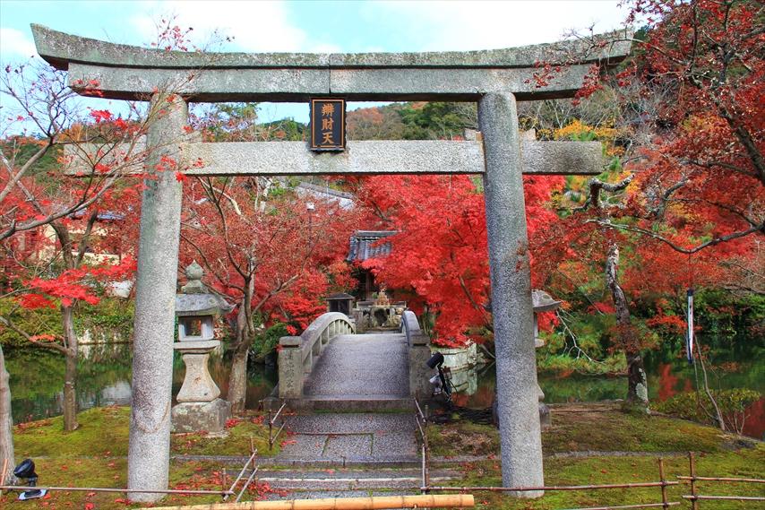 京都を遊ぶ,terise-home,テライズホーム,京都市左京区不動産