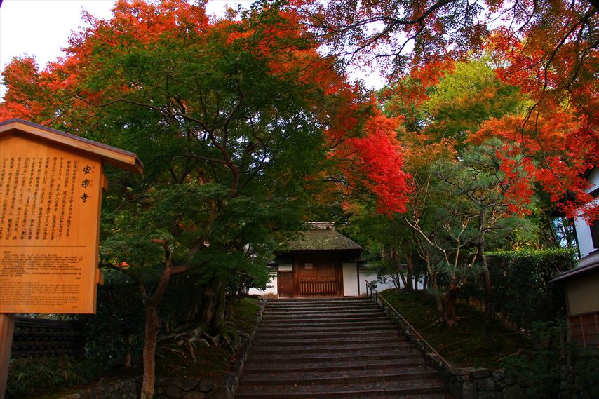 京都を遊ぶ,左京区不動産,テライズホーム