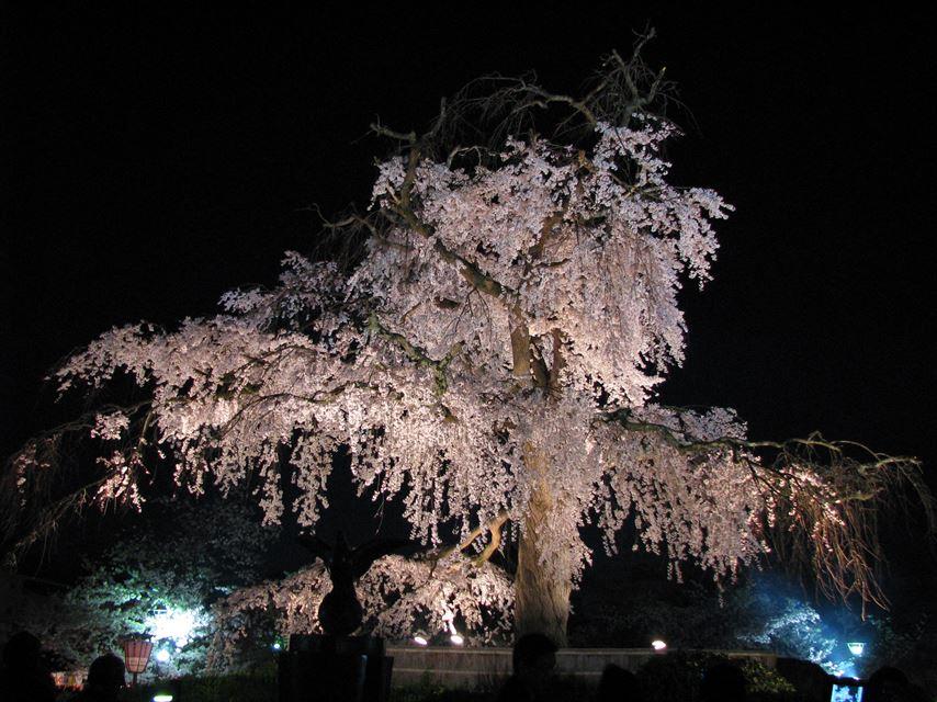 【左京区 不動産】円山公園
