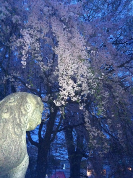 f:id:terry2012:20120502193136j:image:w360