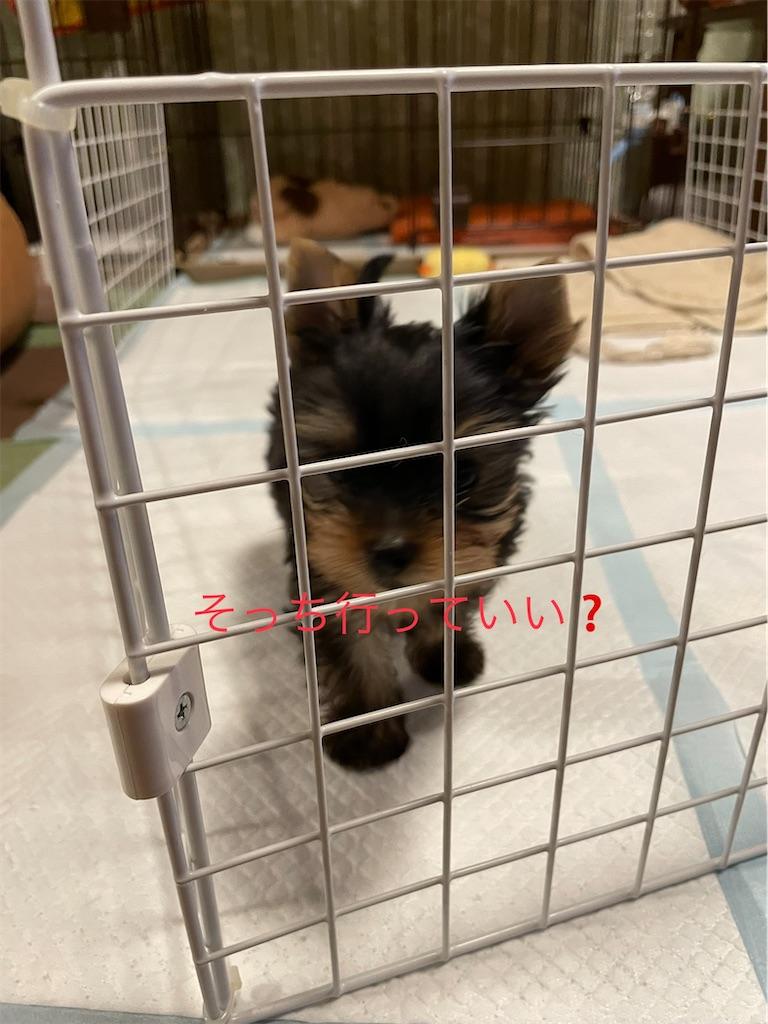 f:id:teru7000:20210603163247j:image