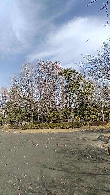 f:id:teru_pi-ko:20210115123700j:image