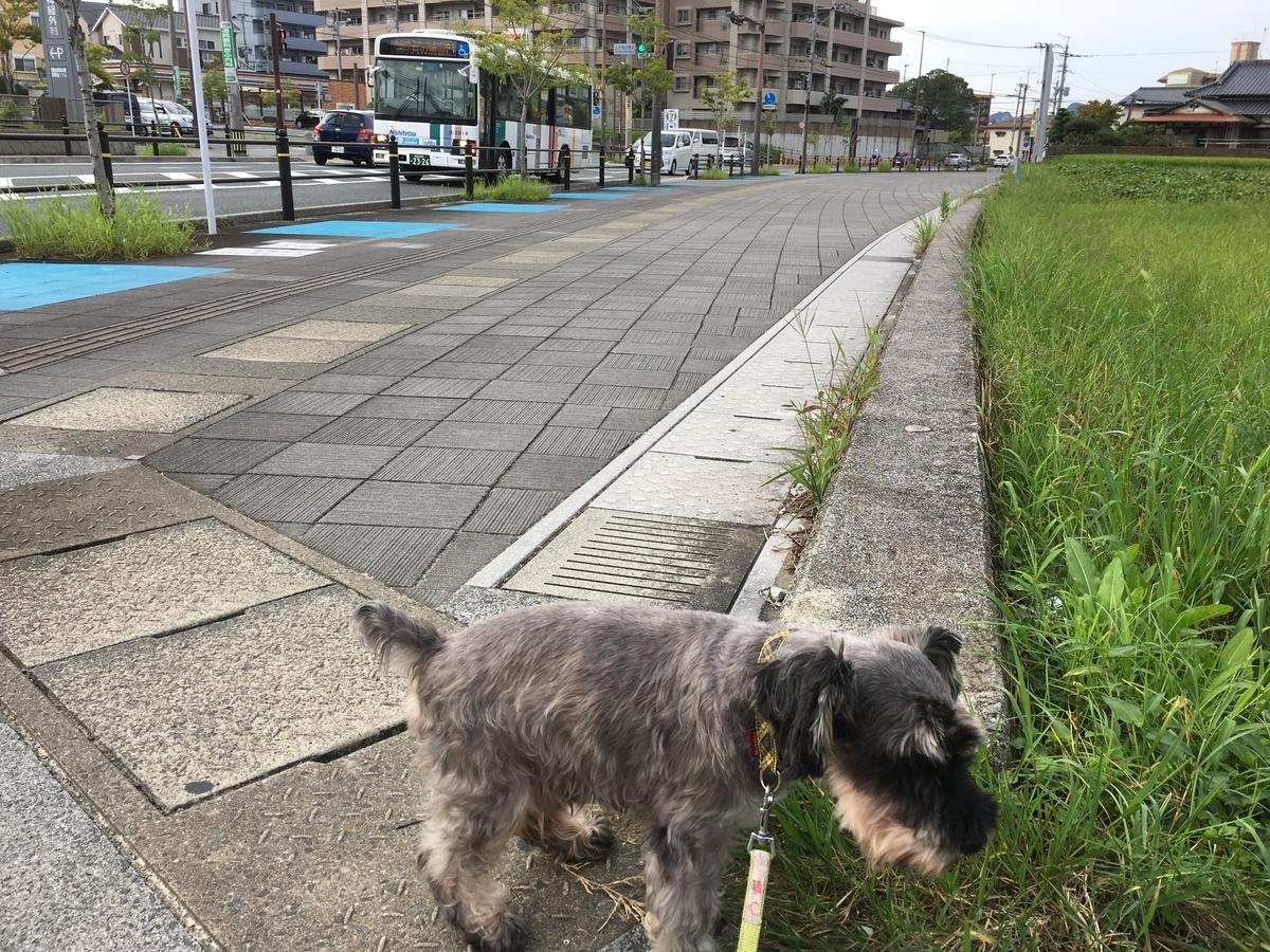 f:id:terubouzu-hare:20190831175608j:plain