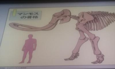 マンモスの骨格