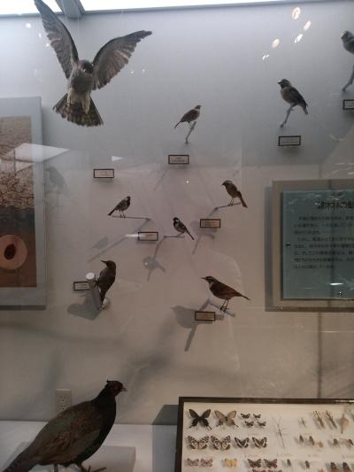雑木林の中の鳥たち