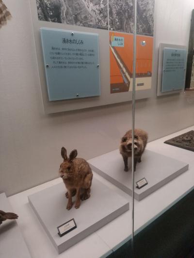 タヌキとウサギ