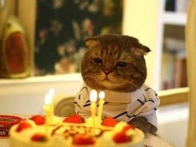 らばQ:やりすぎ?誕生パーティではしゃぐ猫たちの写真16枚