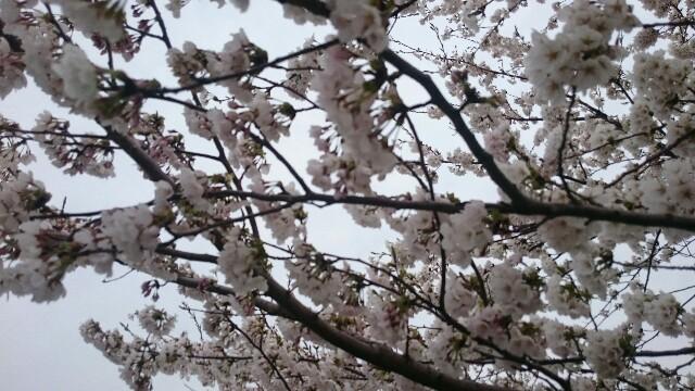 f:id:tetsu-blue:20170416212342j:image