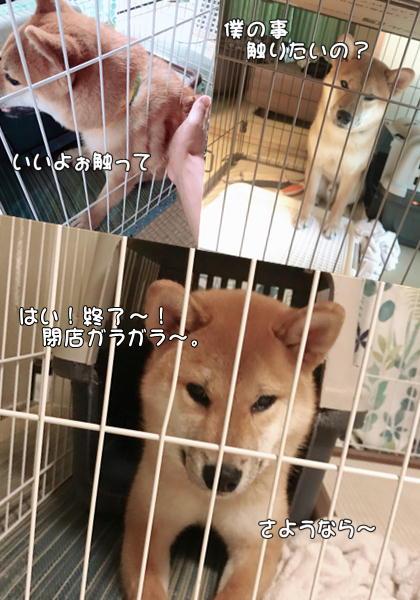 f:id:tetsujin64go:20190722162503j:plain