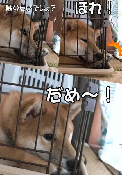 f:id:tetsujin64go:20190725165215j:plain