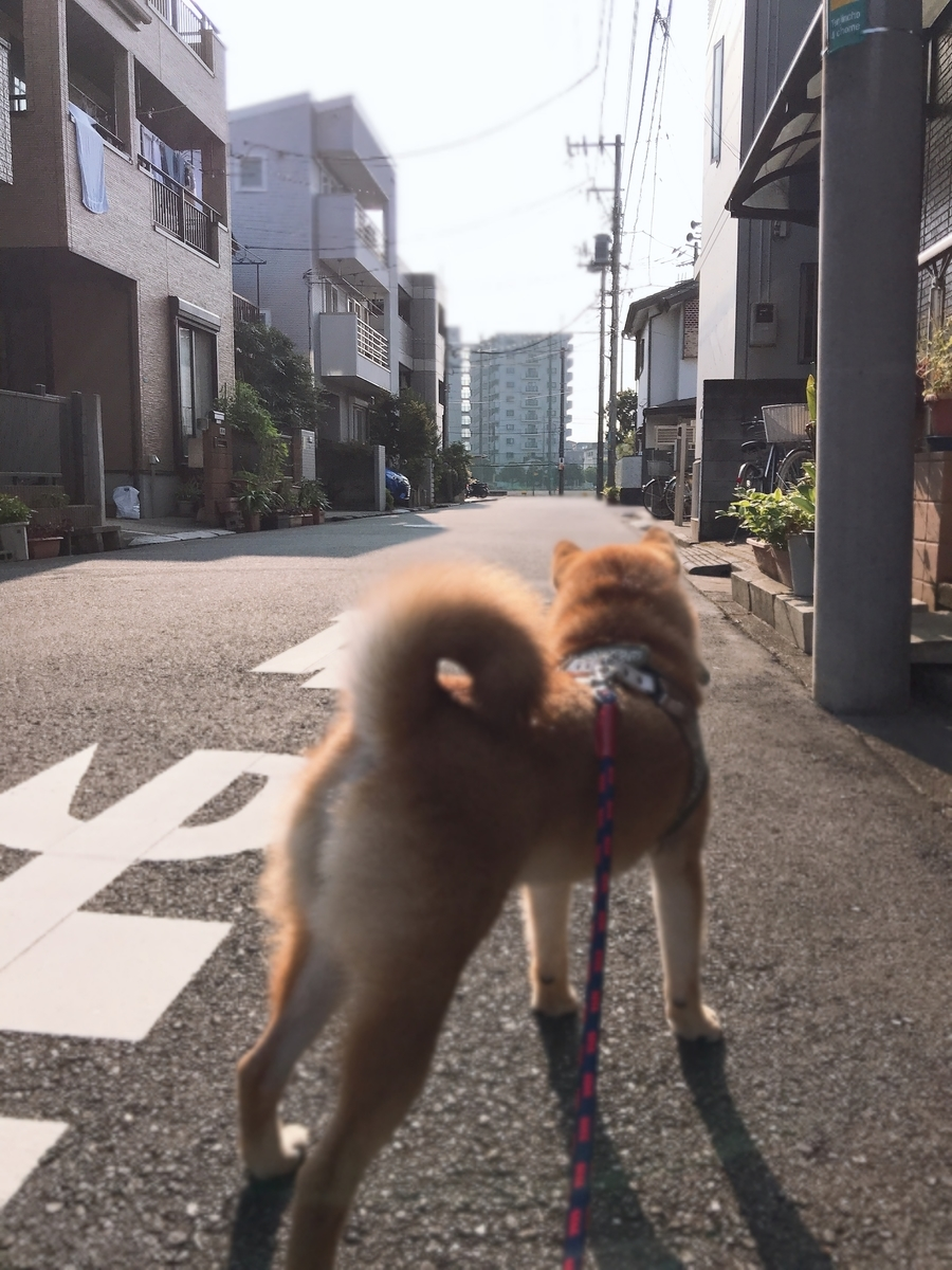 f:id:tetsujin64go:20190731073948j:plain