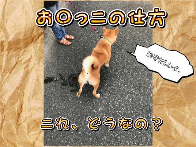 f:id:tetsujin64go:20190808055710j:plain